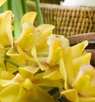 Masáž s bylinkami